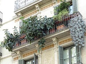 Balkonpflanzen bereichern die Wohnung und sind praktisch