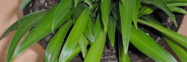 Nützliche Tipps gegen Schimmel im Blumentopf