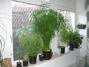 Pflanzen beim Umzug