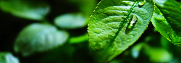 Allgemeine Tipps zur Pflege von Balkonpflanzen